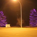 HEAL Purple Trees